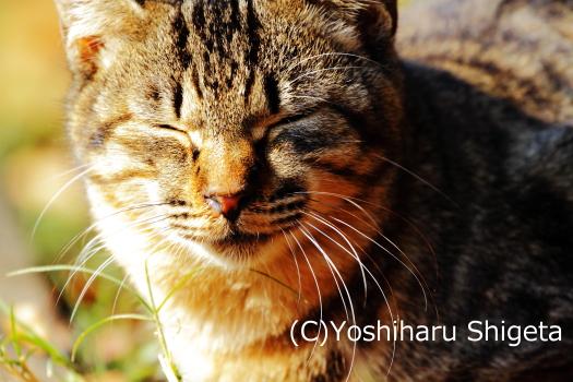 ~ぽかぽか~_c0152400_180023.jpg