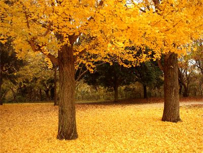 黄金色の公園にて_d0174704_20432425.jpg