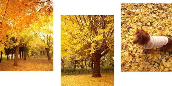 黄金色の公園にて_d0174704_212856.jpg
