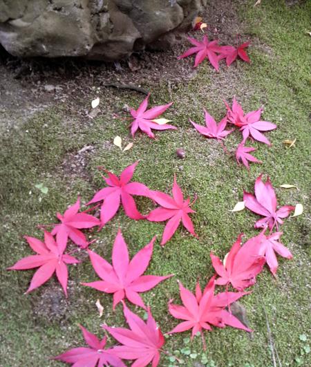 今日は秋晴れ(^^_c0145608_1364991.jpg
