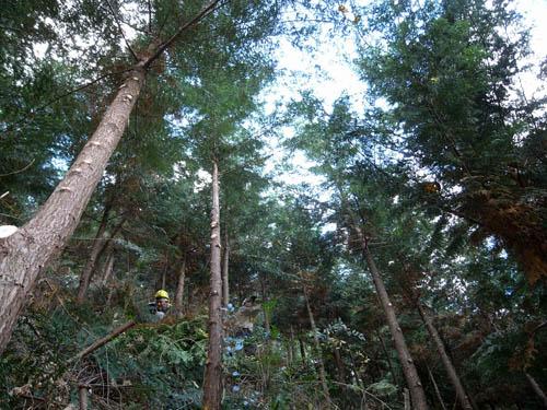 【報告】枝打ちと森の文化祭の準備_e0032609_19564887.jpg