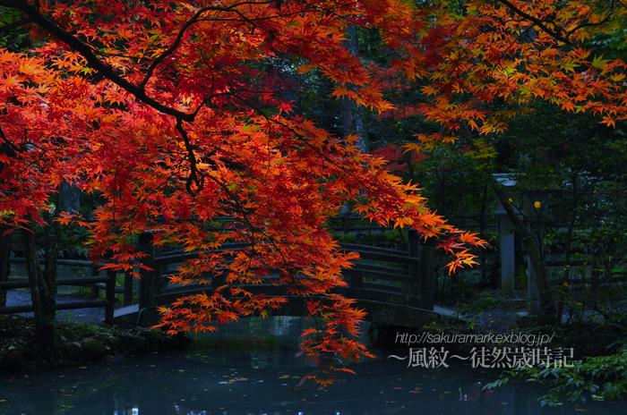 紅葉2010 小国神社Part02。_f0235723_1911930.jpg