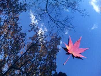 秋から冬へ_e0103024_1258574.jpg