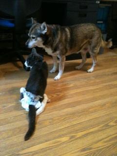 猫のお友だち 祿太くん + 犬のお友だち イチローくん編。_a0143140_22131178.jpg