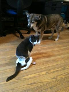 猫のお友だち 祿太くん + 犬のお友だち イチローくん編。_a0143140_2216235.jpg