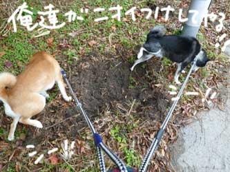 平蔵レポ_b0057675_2354622.jpg