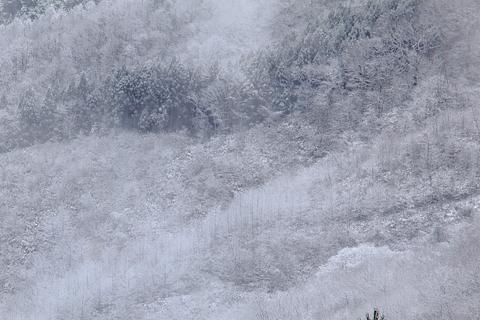 雪の降りた日_f0075075_9172763.jpg