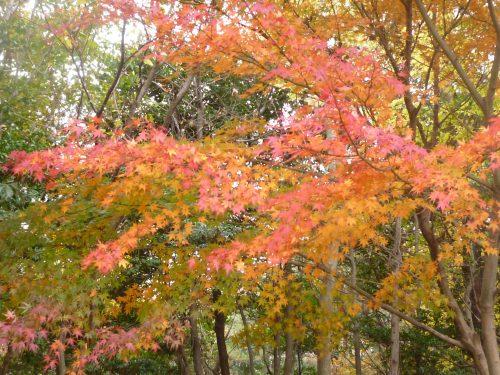 生駒山麓公園_d0078486_20301646.jpg