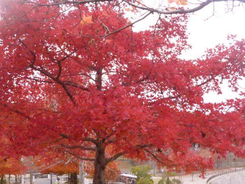 生駒山麓公園_d0078486_21181834.jpg