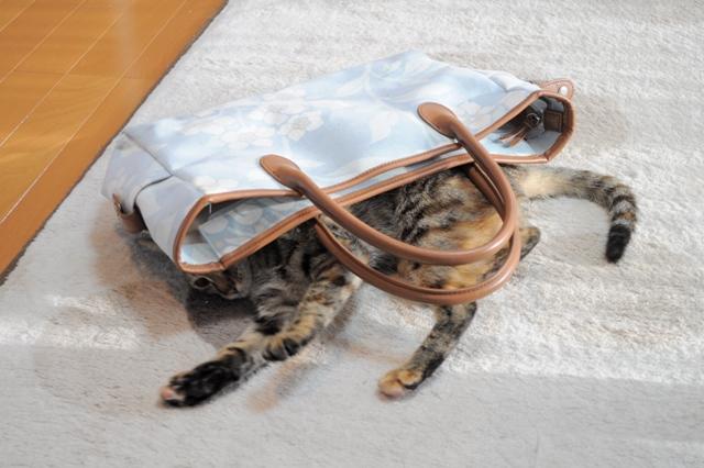 歩き出しそうな鞄_a0126590_635519.jpg