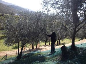 2010年「オリーブオイル買い付けの旅」オリーブ農家訪問トスカーナ編②_d0170094_6124921.jpg