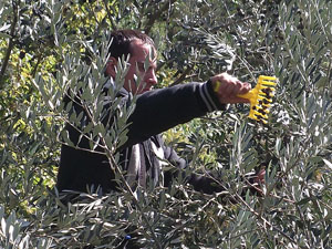 2010年「オリーブオイル買い付けの旅」オリーブ農家訪問トスカーナ編②_d0170094_6391032.jpg