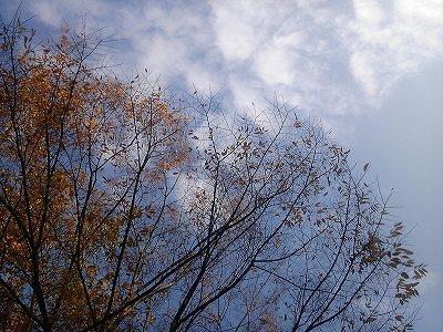 やっぱり秋は何かが始まる季節。_d0123425_23413448.jpg