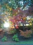 大浦荘の紅葉を見に行ったら…_f0040233_22502372.jpg