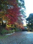 大浦荘の紅葉を見に行ったら…_f0040233_22531265.jpg