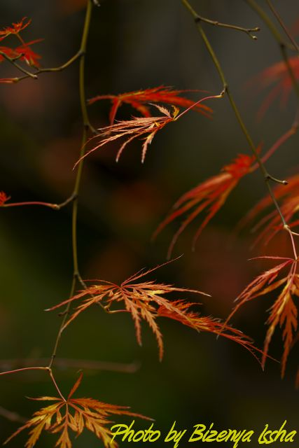 北鎌倉『海蔵寺の秋』_d0086248_64539100.jpg
