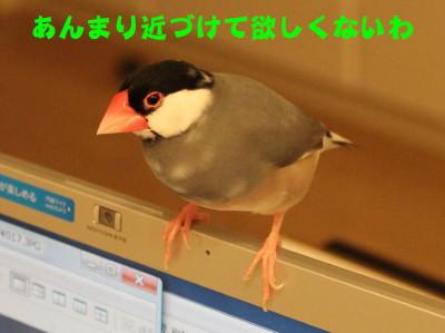 b0158061_22332778.jpg