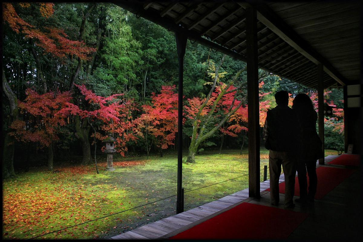 紅葉 2010 <高桐院. 大徳寺>_f0021869_22175452.jpg