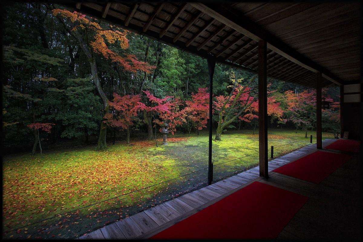 紅葉 2010 <高桐院. 大徳寺>_f0021869_22181712.jpg