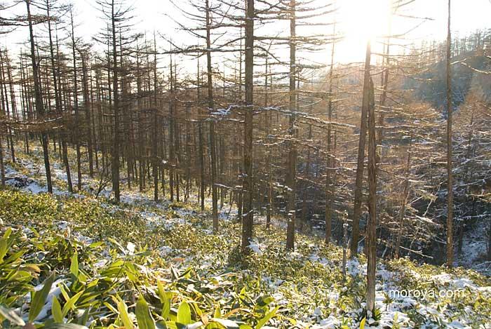 初雪の頃_c0085877_7144630.jpg