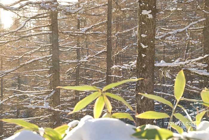 初雪の頃_c0085877_7145499.jpg