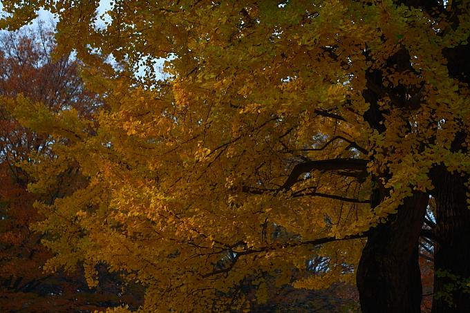 都立野川公園の紅葉 その2_e0165983_10201480.jpg