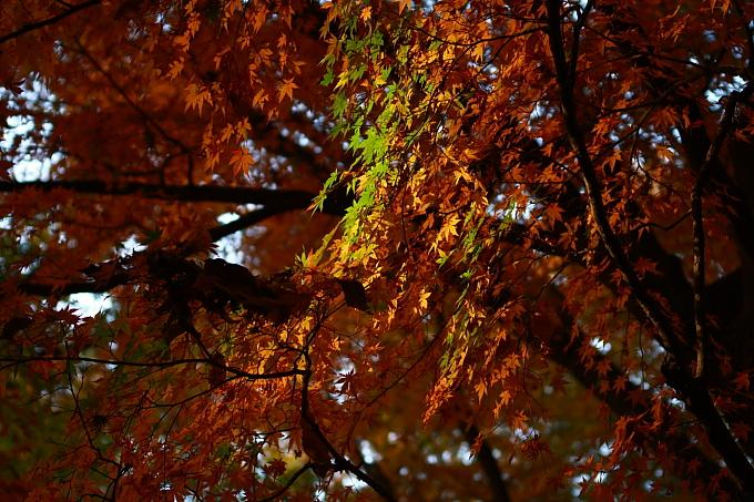 都立野川公園の紅葉 その2_e0165983_1022070.jpg
