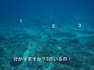 念願のピピ島オーバーナイト♪_f0144385_0444490.jpg