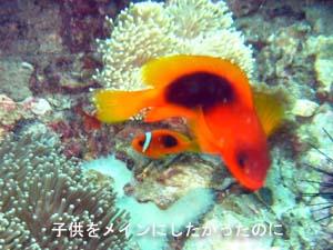 念願のピピ島オーバーナイト♪_f0144385_0461190.jpg
