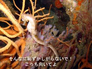 念願のピピ島オーバーナイト♪_f0144385_0471895.jpg