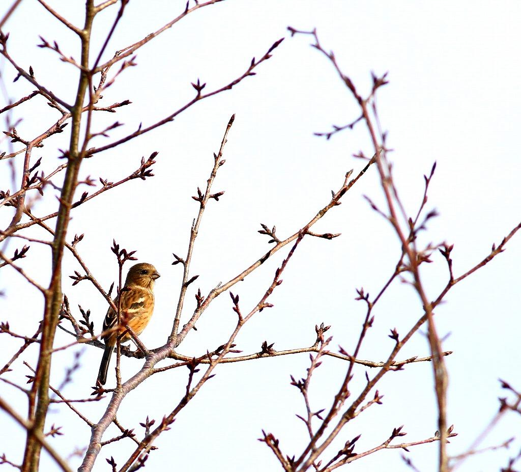 高い木の天辺に・・・_c0213607_18261027.jpg