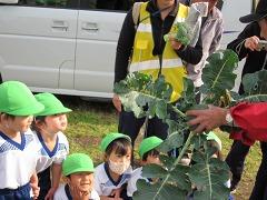 12月2日(年少 ブロッコリー収穫)_d0091723_22302325.jpg