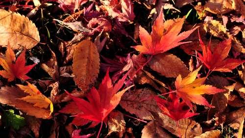 季節の終わり_c0220824_21431015.jpg