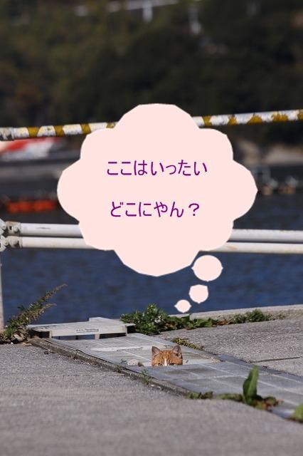 a0076825_2013795.jpg