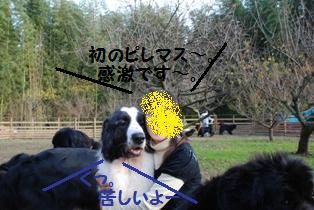 f0077931_203595.jpg