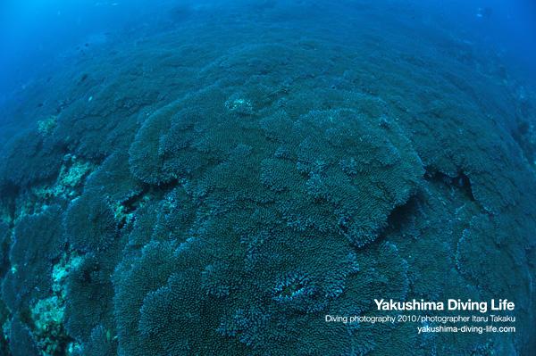 海のキャベツ畑!_b0186442_18343317.jpg