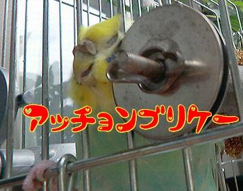 f0196665_0345823.jpg