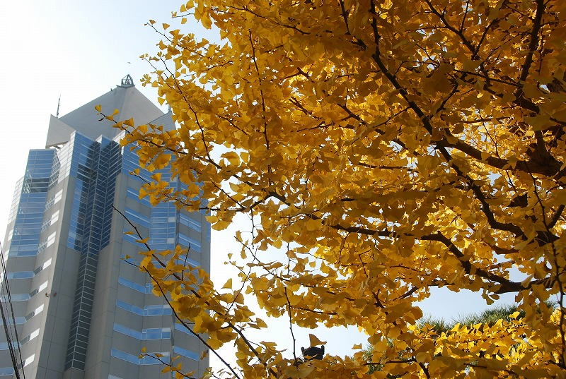 秋の新潟③_c0187781_11252746.jpg