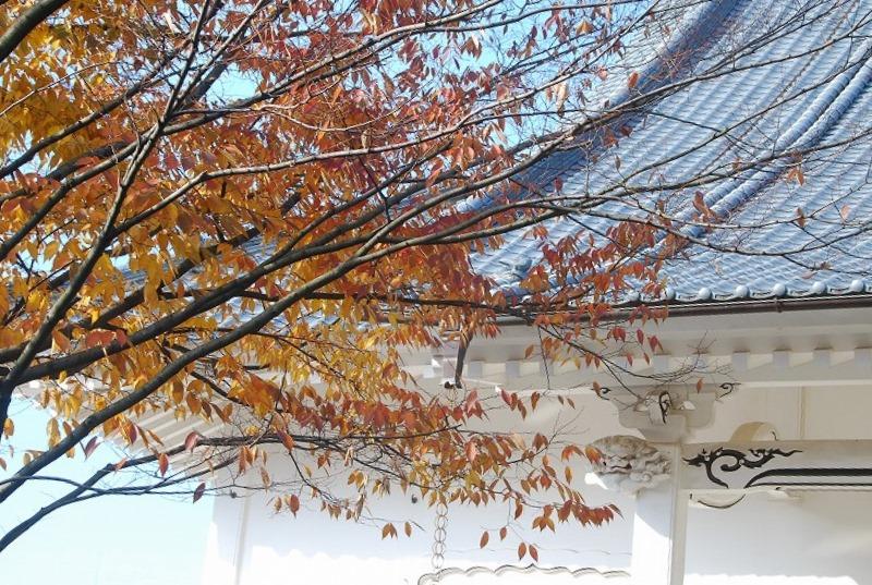 秋の新潟③_c0187781_1129417.jpg