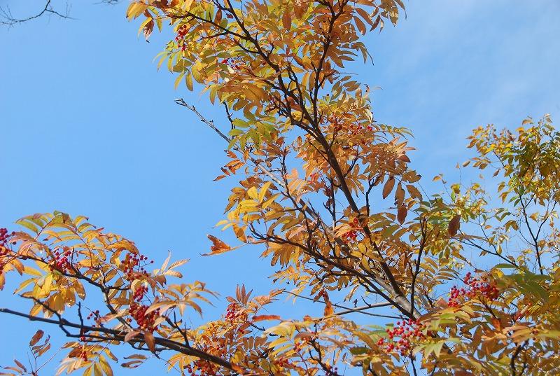 秋の新潟③_c0187781_11393294.jpg