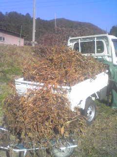 黒豆、収穫。_a0138985_22141789.jpg