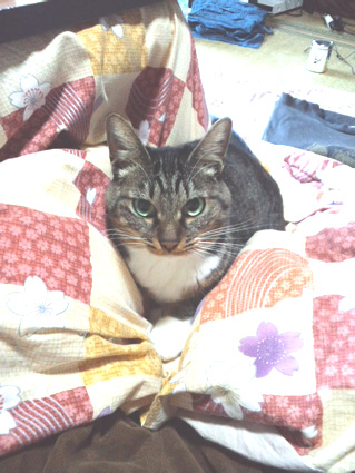 ネコとケンカしたにゃん_e0127286_10511761.jpg