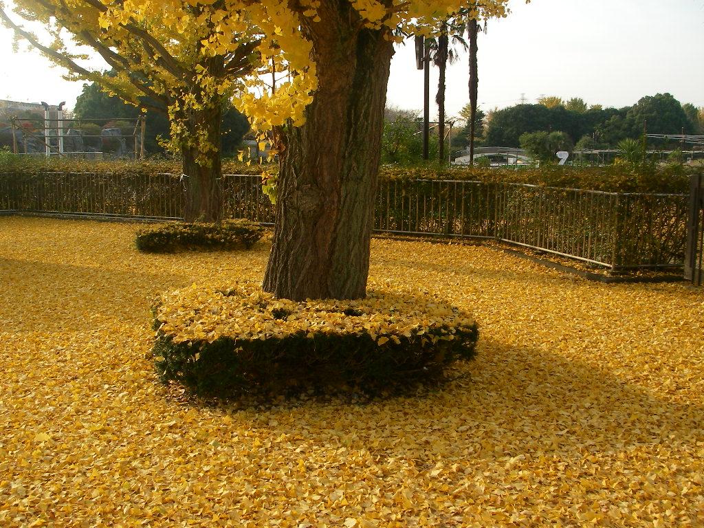 記念公園通信_b0172896_1557663.jpg