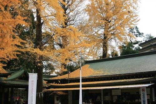 【散撮】紅葉も終わりですかね_f0141609_130461.jpg