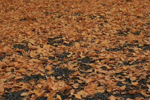 【散撮】紅葉も終わりですかね_f0141609_1311849.jpg