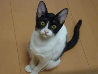 迷子猫のお友だち こちびちゃん編。_a0143140_194488.jpg