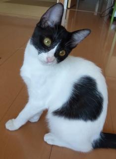 迷子猫のお友だち こちびちゃん編。_a0143140_1953543.jpg