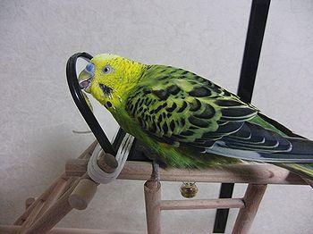 f0196665_054773.jpg