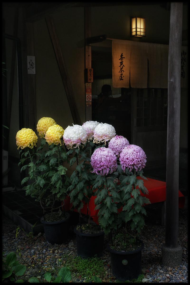菊_f0021869_0181347.jpg