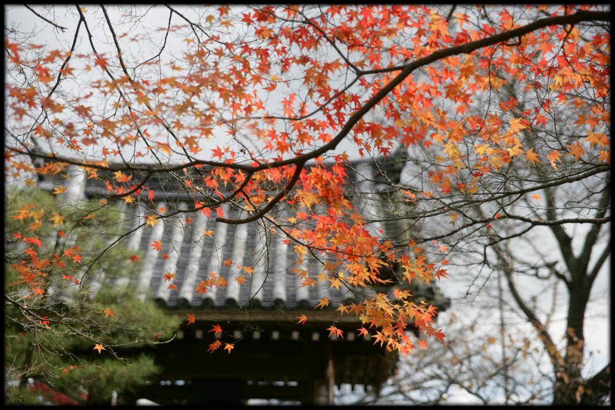 紅葉 2010 <善峯寺> 1_f0021869_23261467.jpg